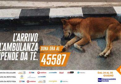 ambulanza veterinaria per soccorso animali