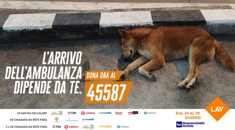 ambulanza veterinaria per soccorso animali