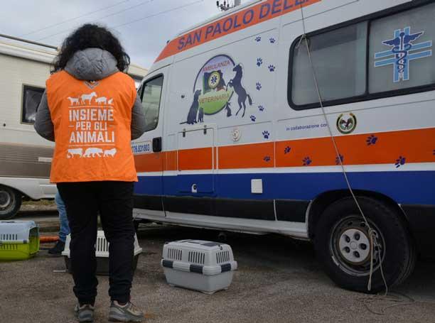 ambulanza-veterinaria-soccorso-animali
