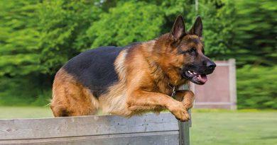 campionato addestramento cani modena pastore tedesco